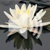 3. Как медитировать
