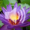 3. Совместная медитация