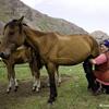 4.Как насчёт молока козы, кобылы, верблюда?