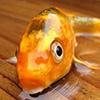 2. Рыба без воды