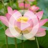 1. Виды медитации (ВИДЕО)