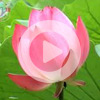 2. Медитация с дыханием (ВИДЕО)