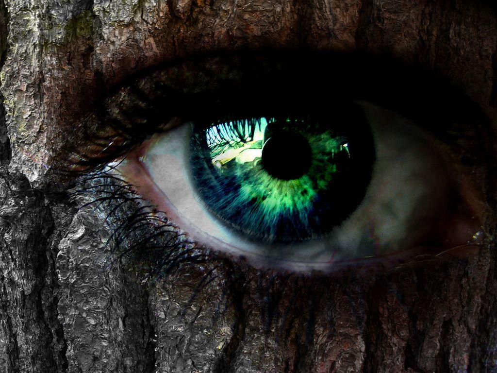 Деревья тоже сознательные