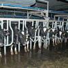 5. Содержание молочного стада