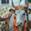 6. Как мы можем помочь коровам? (Видео)
